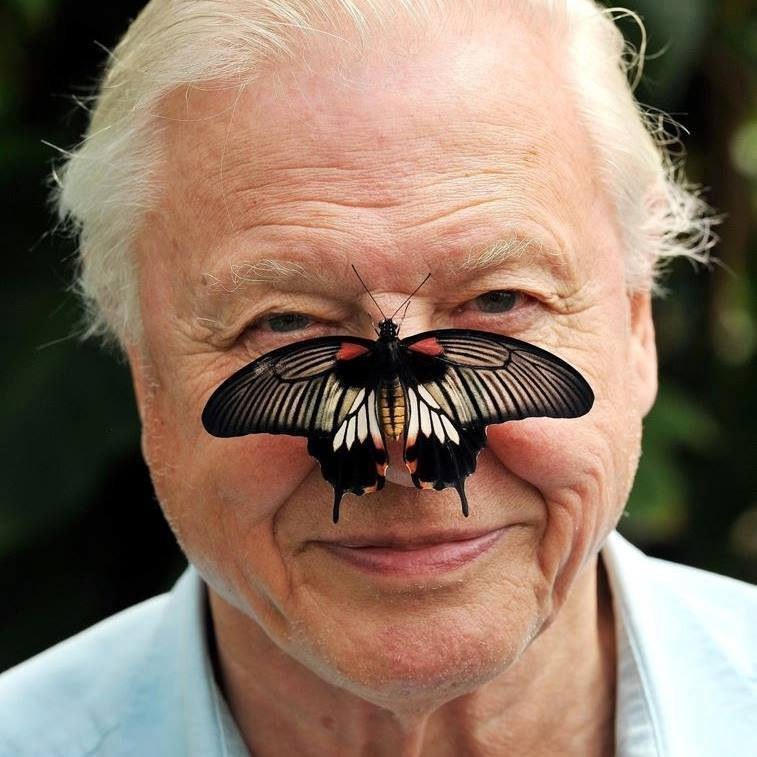 Sir David Attenborough's Speech At Katowice:  Why It Should Matter To Christians!